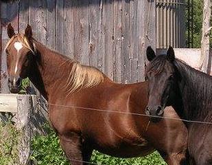 Outside Horse