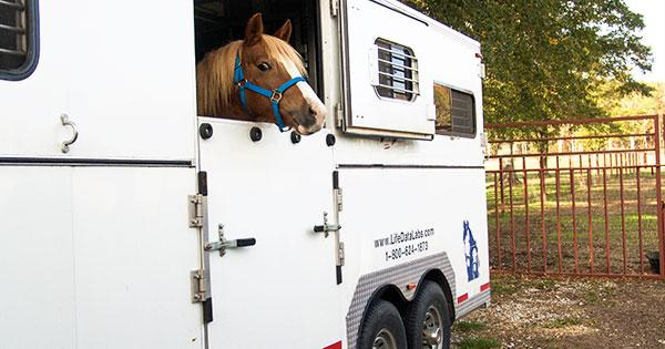 Trailer Trained Horse