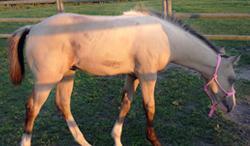 Baby horse in field
