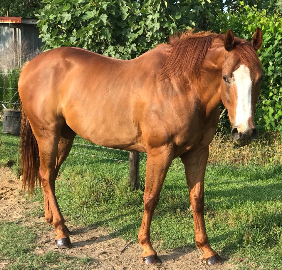 Cajun the Horse