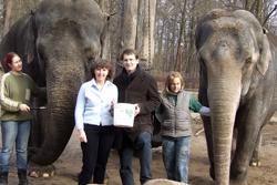 Elephants with staff