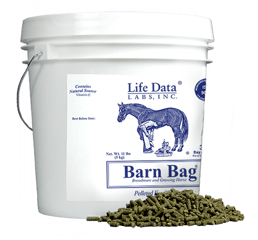 early equine nutrition