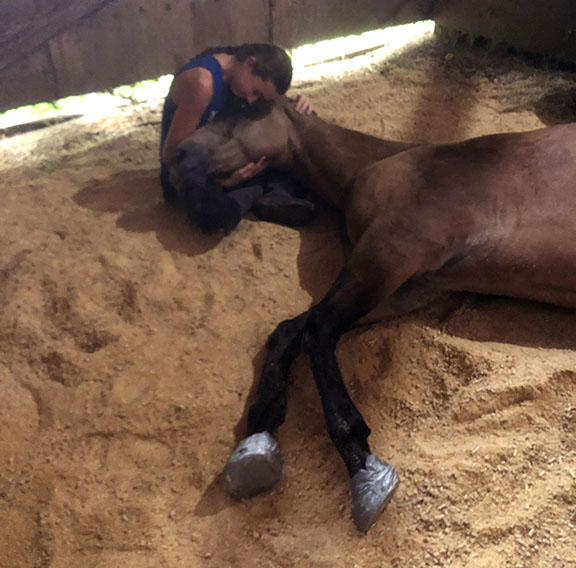 Horse with laminitis Laying Down