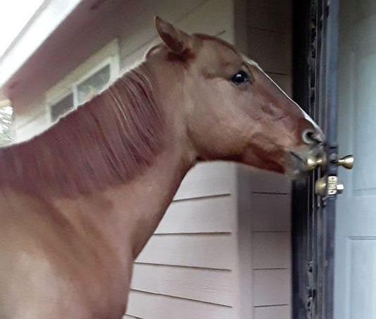 renee's horse opening door