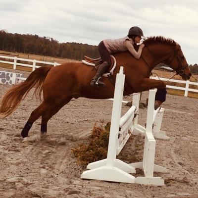 Lorie Jumping Horse